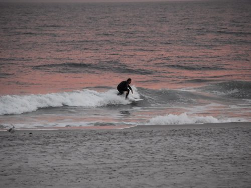 Silhouette of surfer riding the waves during a pink sunset in long island New York
